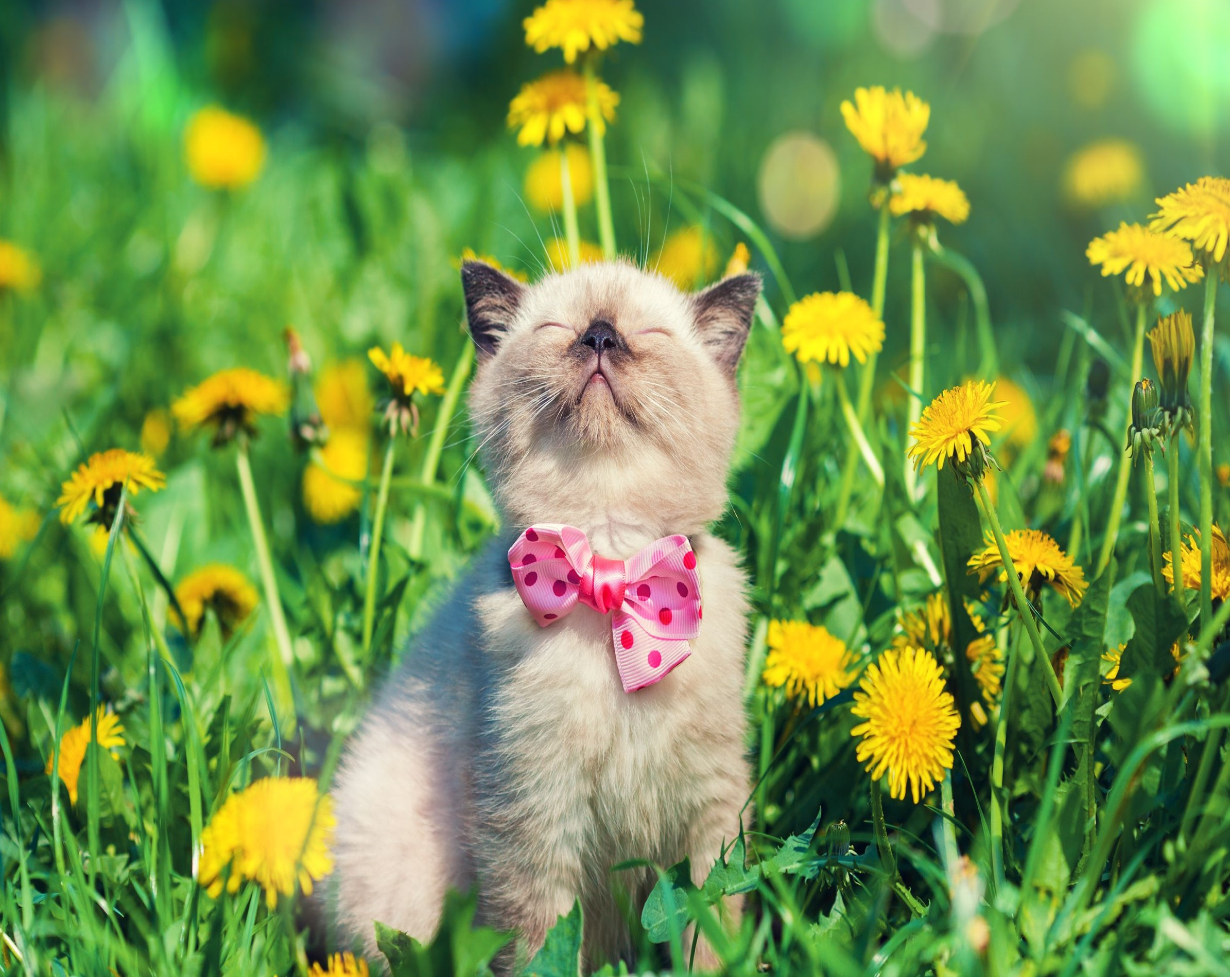 Иммунитет кошек