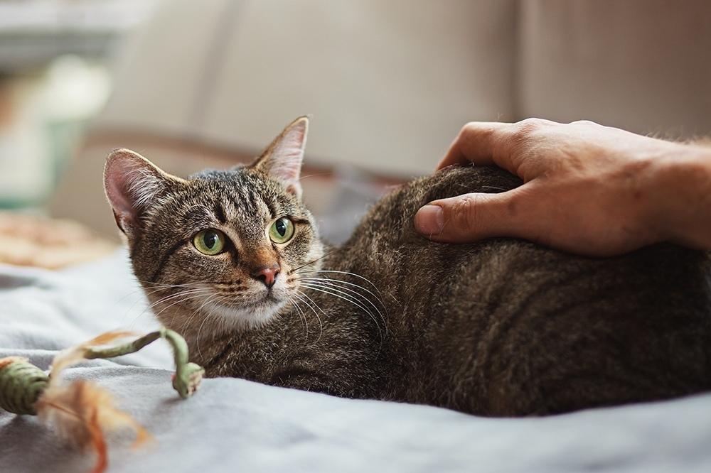 Уход за кошкой после вакцинации