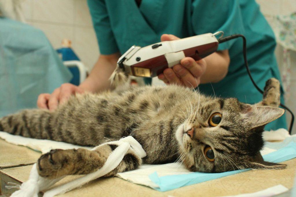 операция стерилизации кошки
